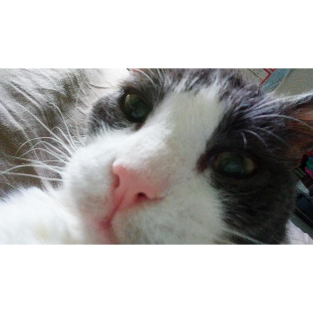 https://www.shelterluv.com/sites/default/files/animal_pics/464/2018/08/31/15/20180831152016.png