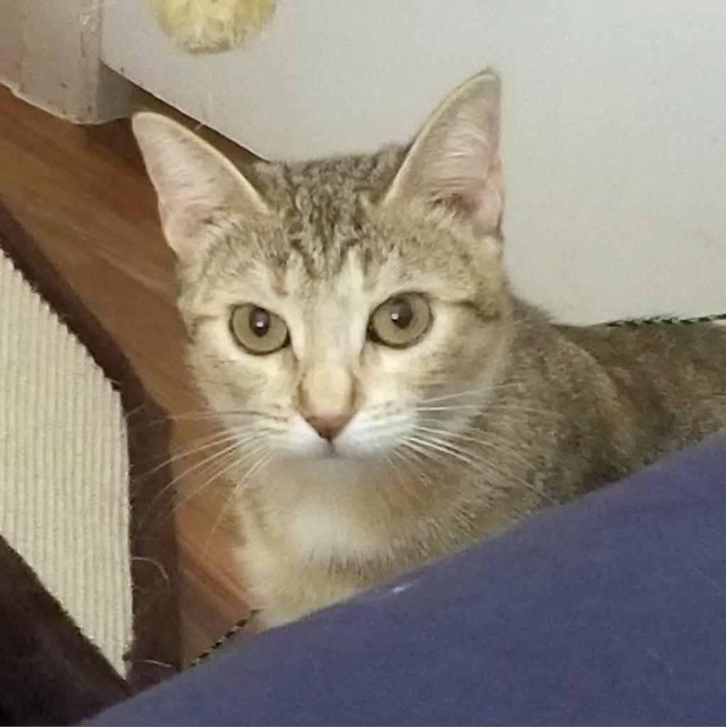 https://www.shelterluv.com/sites/default/files/animal_pics/464/2018/08/31/15/20180831152736.png