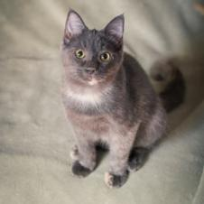 Photo of Paloma