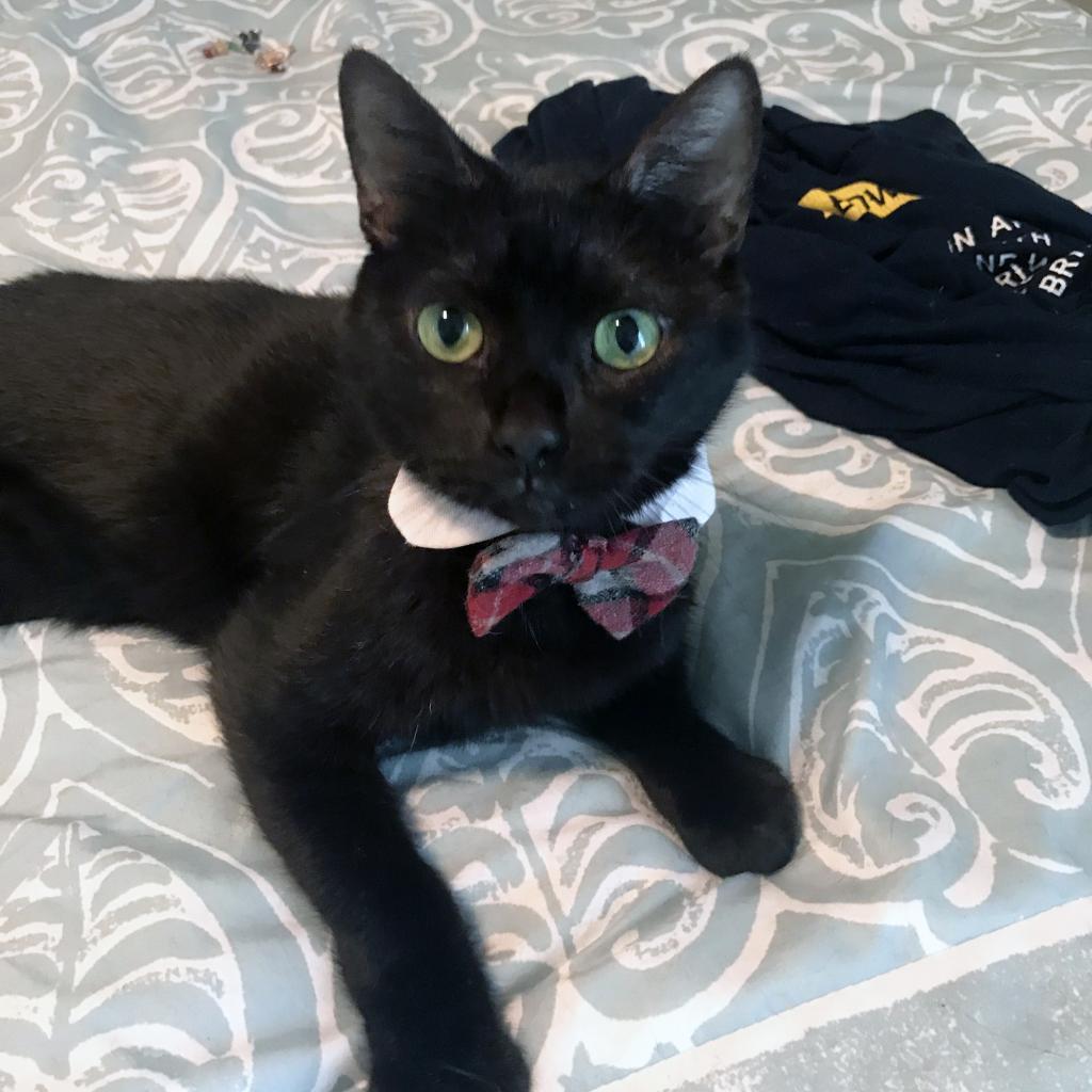 Photo of Blacky 3