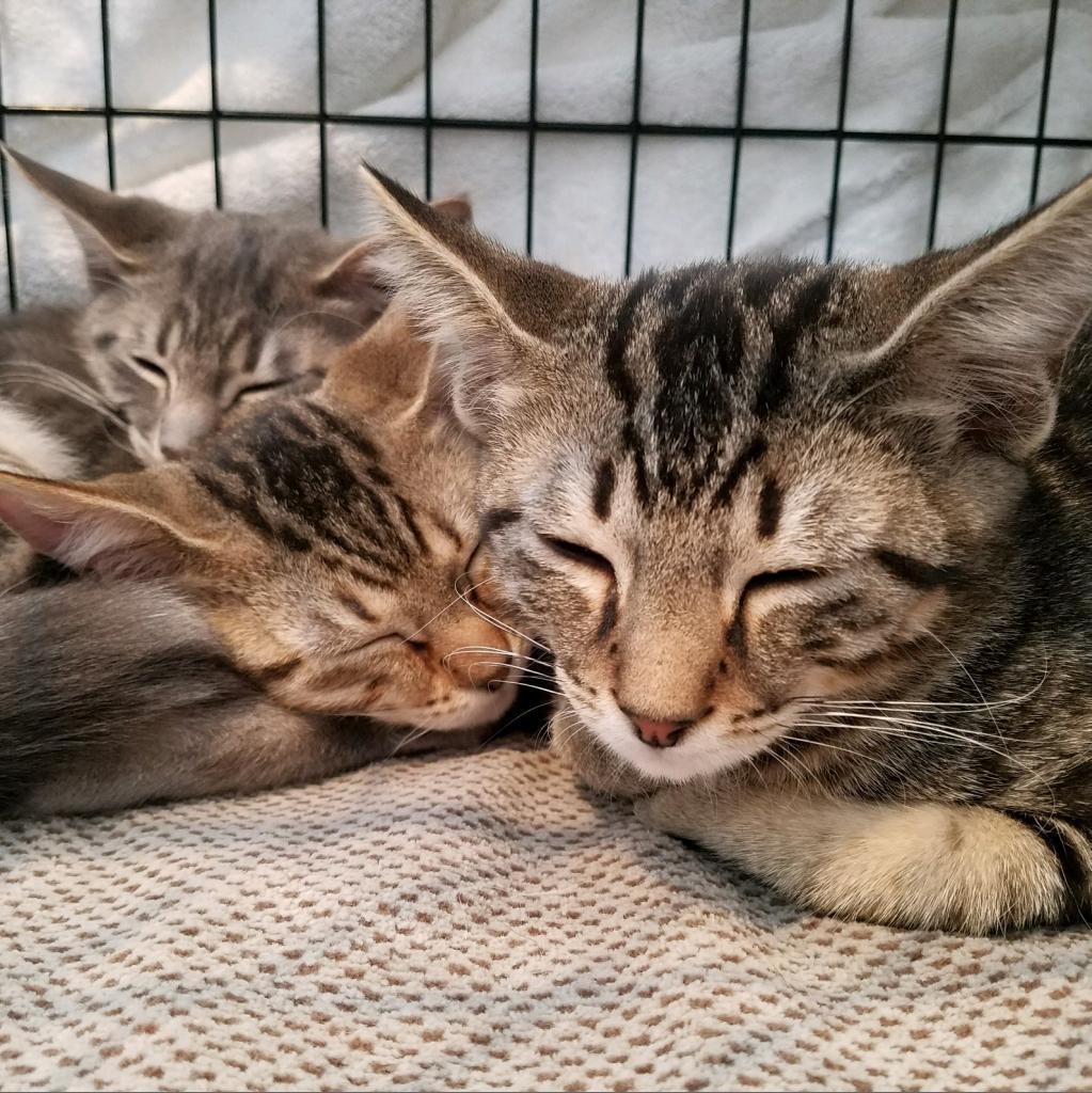https://www.shelterluv.com/sites/default/files/animal_pics/464/2018/09/02/14/20180902141302.png