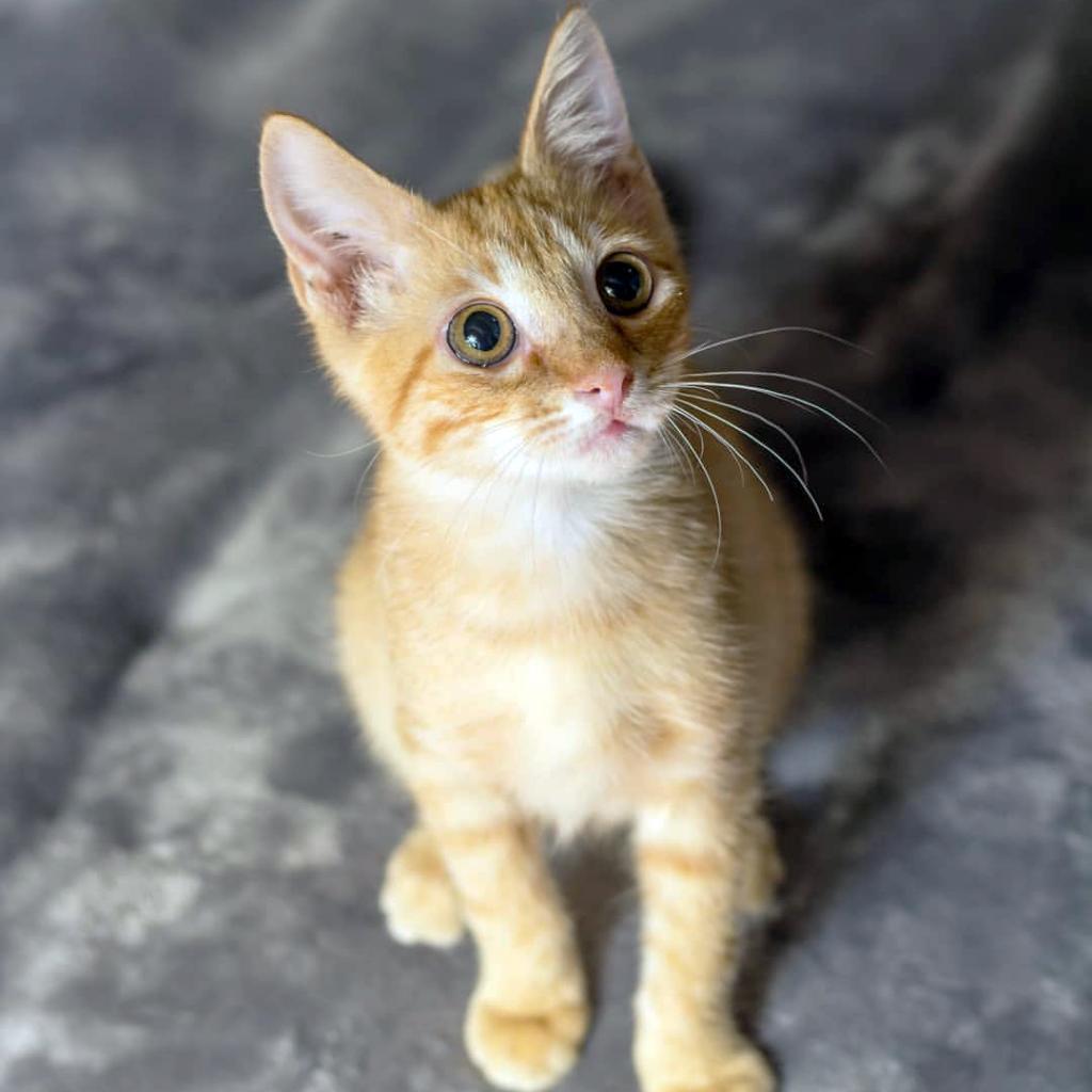 Photo of Ralph