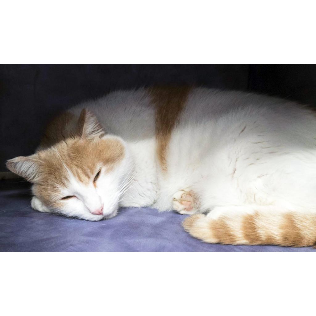 https://www.shelterluv.com/sites/default/files/animal_pics/464/2018/09/02/18/20180902182726.png