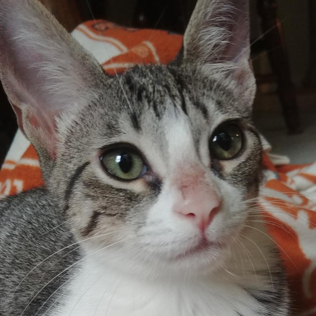 Photo of Sarafina