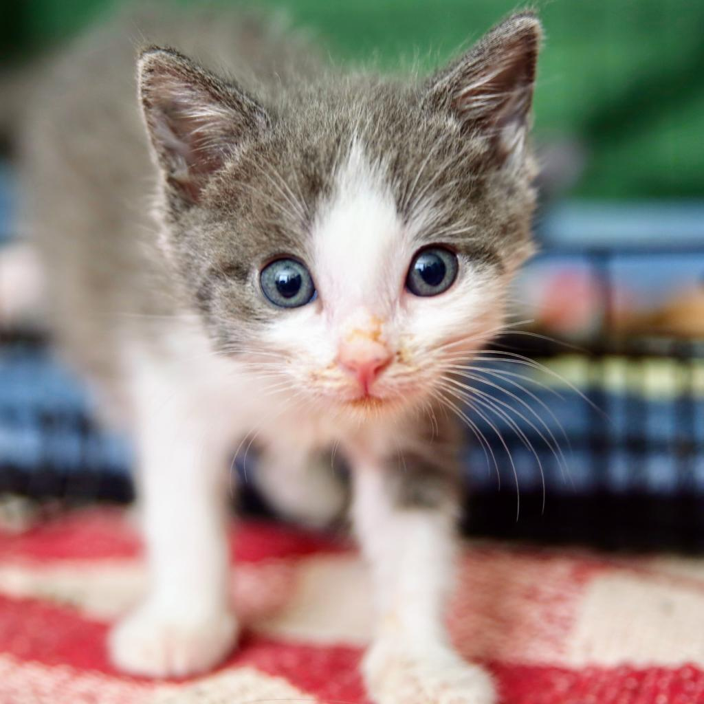 https://www.shelterluv.com/sites/default/files/animal_pics/464/2018/09/13/16/20180913165439.png