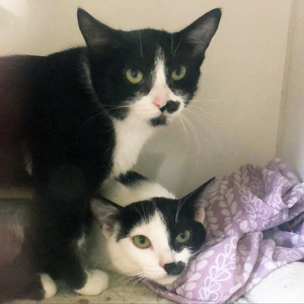 https://www.shelterluv.com/sites/default/files/animal_pics/464/2018/10/07/16/20181007165102.png