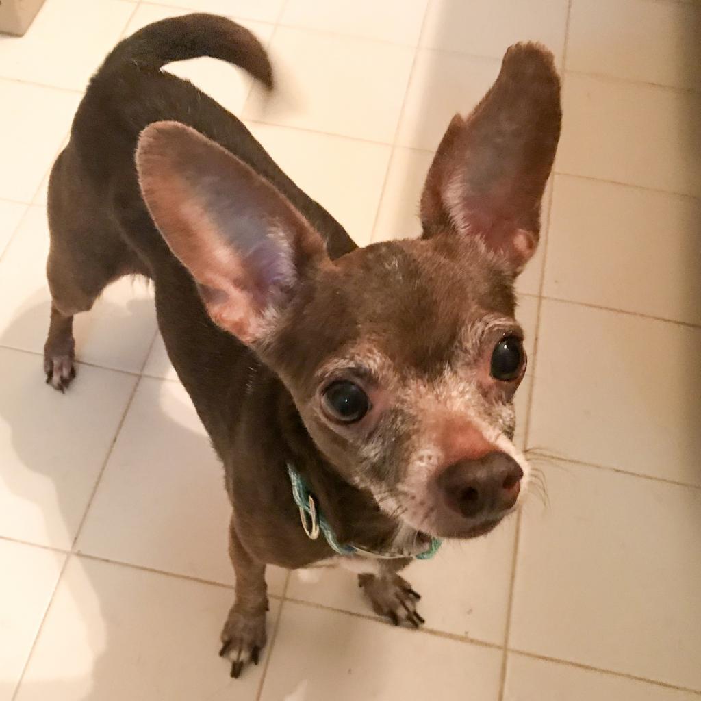 https://www.shelterluv.com/sites/default/files/animal_pics/464/2018/10/11/00/20181011005140.png