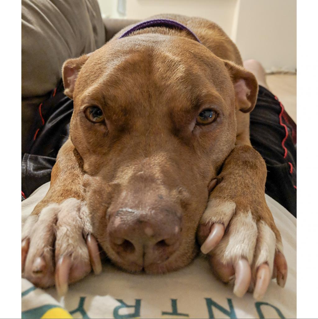 https://www.shelterluv.com/sites/default/files/animal_pics/464/2018/10/11/00/20181011005648.png