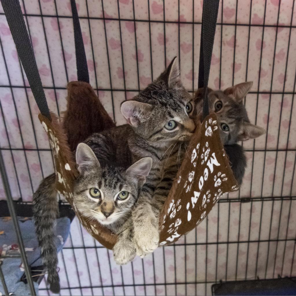 https://www.shelterluv.com/sites/default/files/animal_pics/464/2018/10/12/15/20181012154802.png