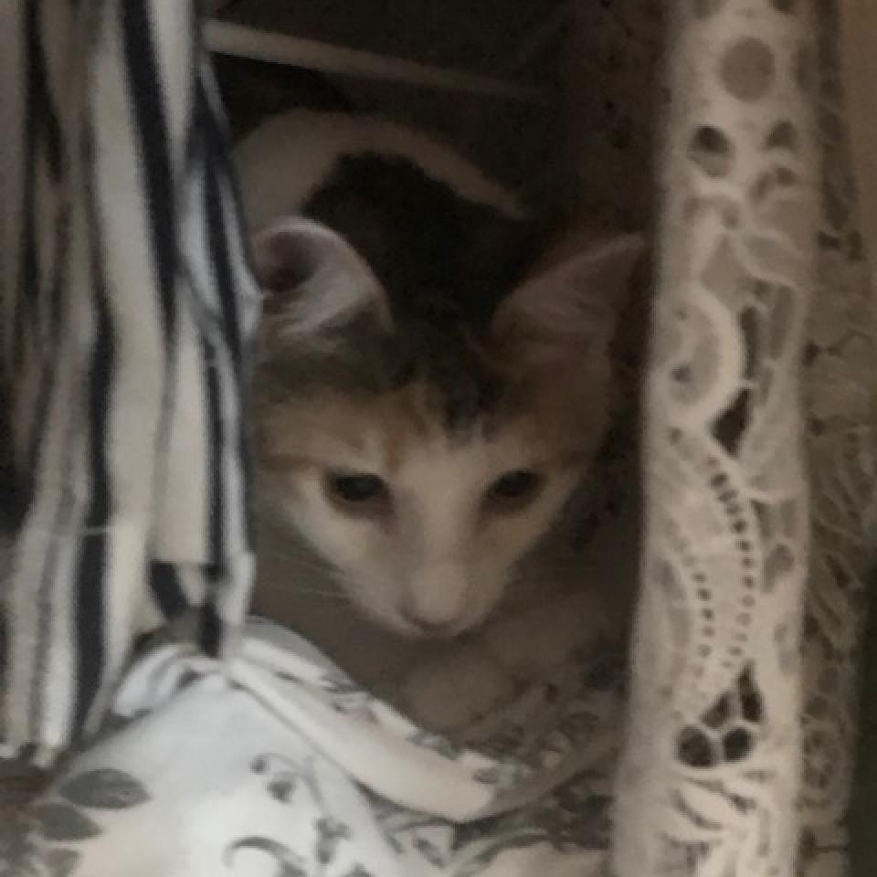 https://www.shelterluv.com/sites/default/files/animal_pics/464/2018/10/15/17/20181015175721.png