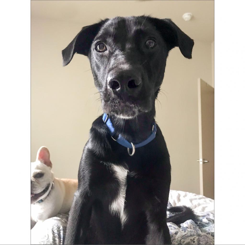 https://www.shelterluv.com/sites/default/files/animal_pics/464/2018/10/20/23/20181020235247.png