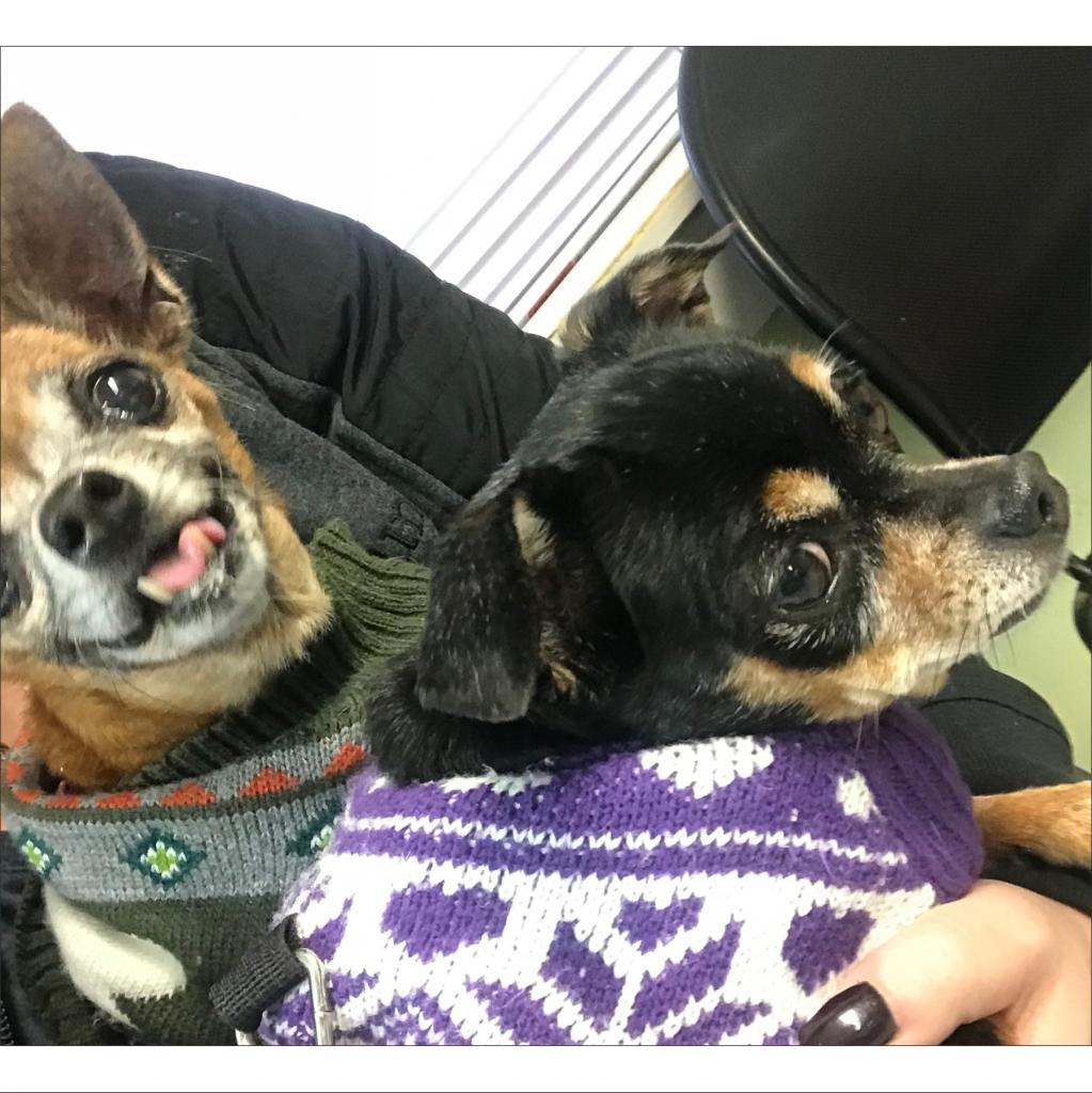 https://www.shelterluv.com/sites/default/files/animal_pics/464/2018/10/24/08/20181024084128.png