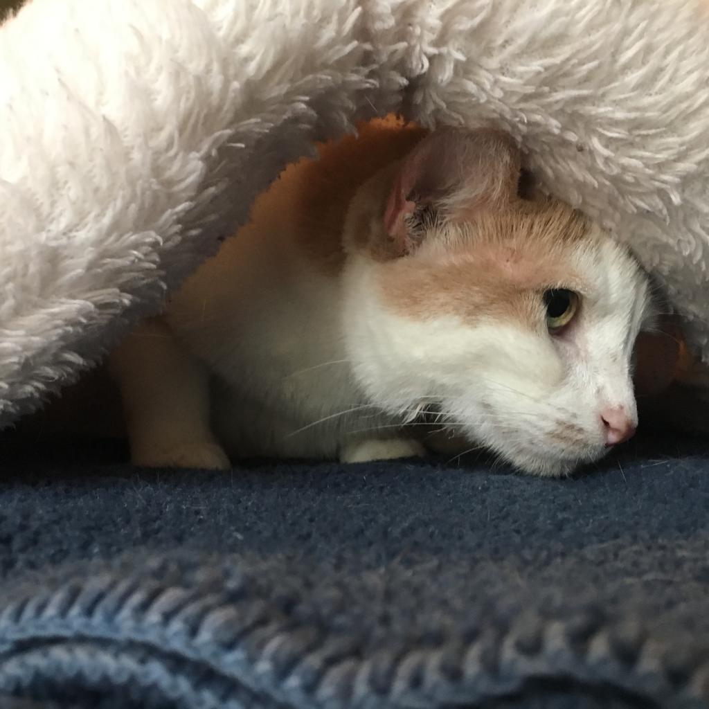 https://www.shelterluv.com/sites/default/files/animal_pics/464/2018/10/29/18/20181029181224.png