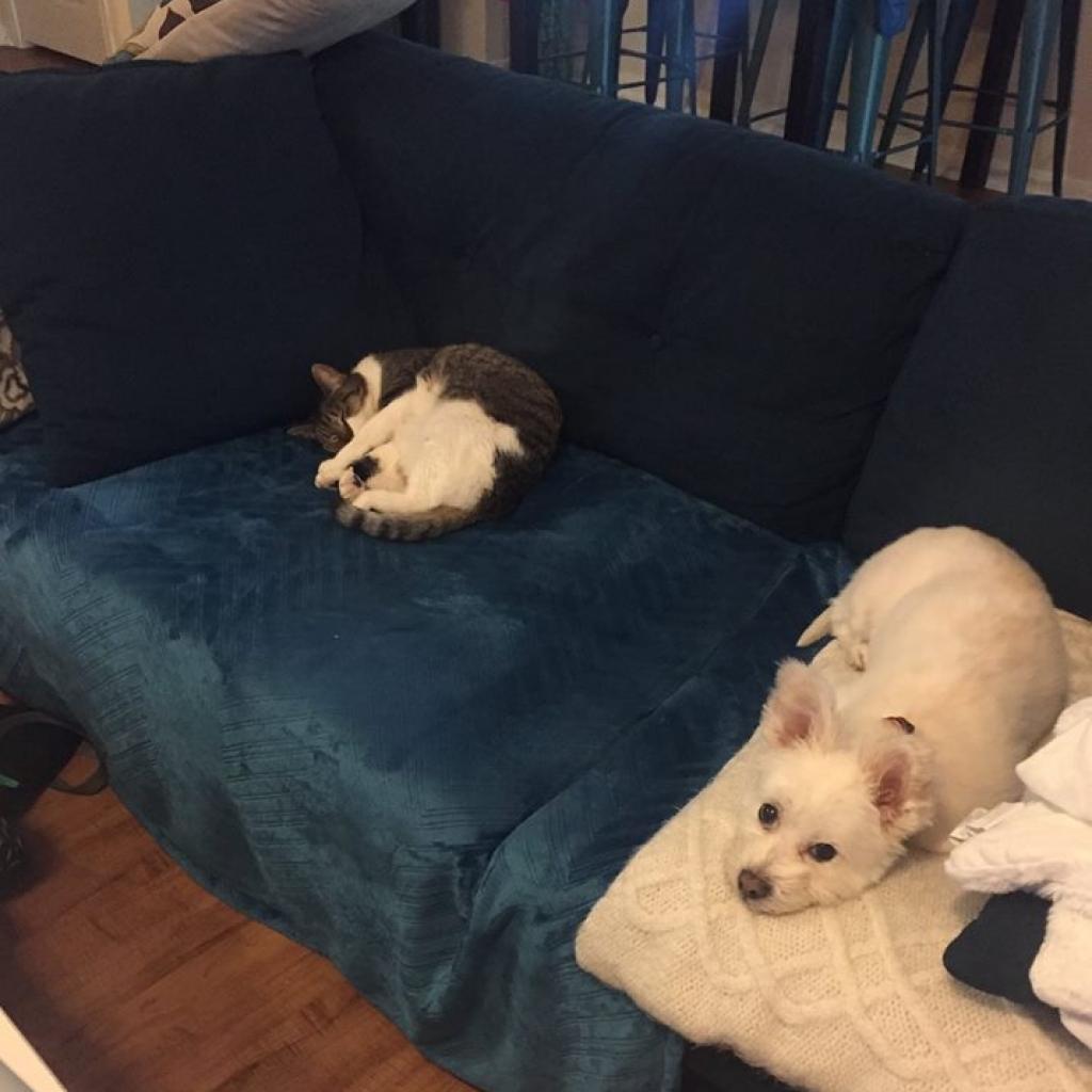 https://www.shelterluv.com/sites/default/files/animal_pics/464/2018/10/30/18/20181030182646.png