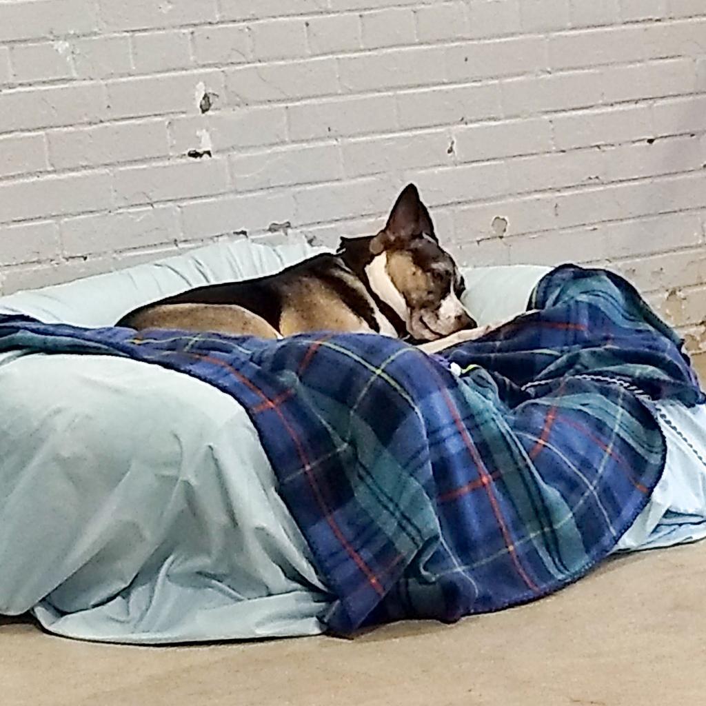 https://www.shelterluv.com/sites/default/files/animal_pics/464/2018/11/01/00/20181101001043.png
