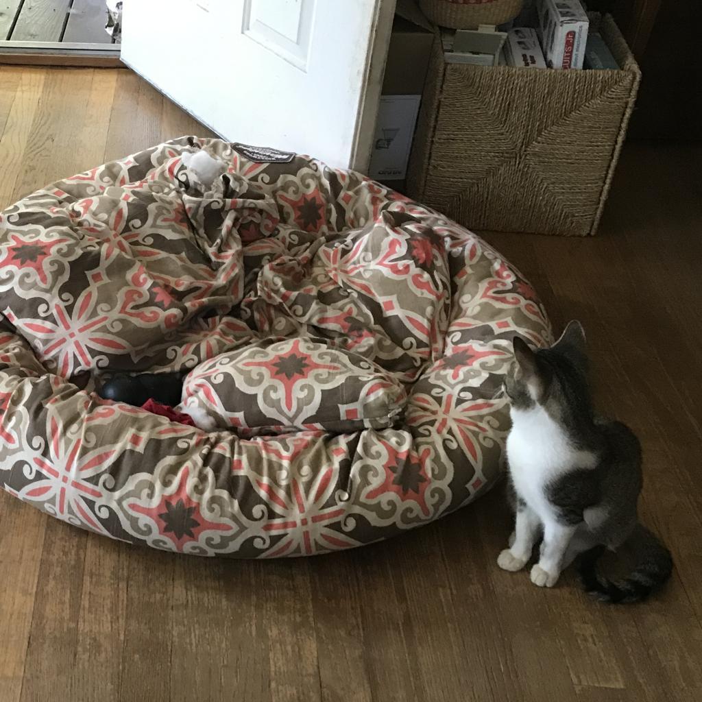 https://www.shelterluv.com/sites/default/files/animal_pics/464/2018/11/01/18/20181101185122.png