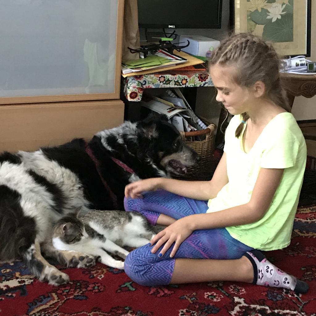 https://www.shelterluv.com/sites/default/files/animal_pics/464/2018/11/01/18/20181101185306.png