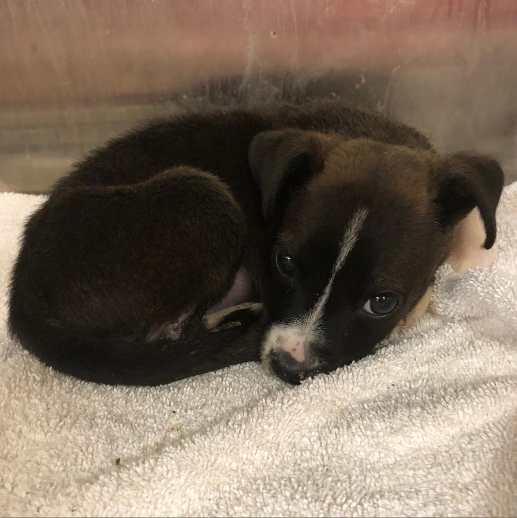 https://www.shelterluv.com/sites/default/files/animal_pics/464/2018/11/04/10/20181104105541.png