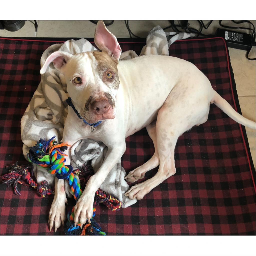 https://www.shelterluv.com/sites/default/files/animal_pics/464/2018/11/07/23/20181107230107.png
