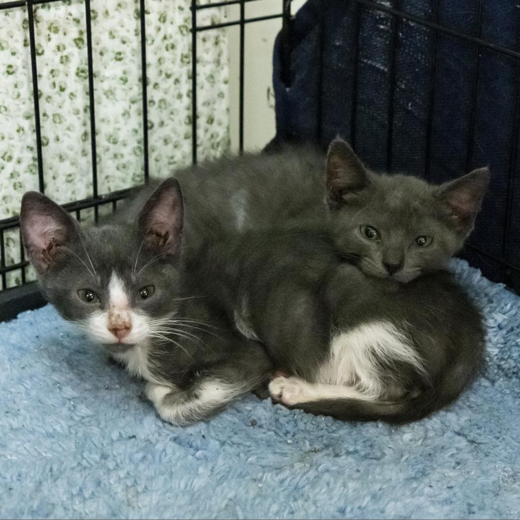 https://www.shelterluv.com/sites/default/files/animal_pics/464/2018/11/08/15/20181108155244.png
