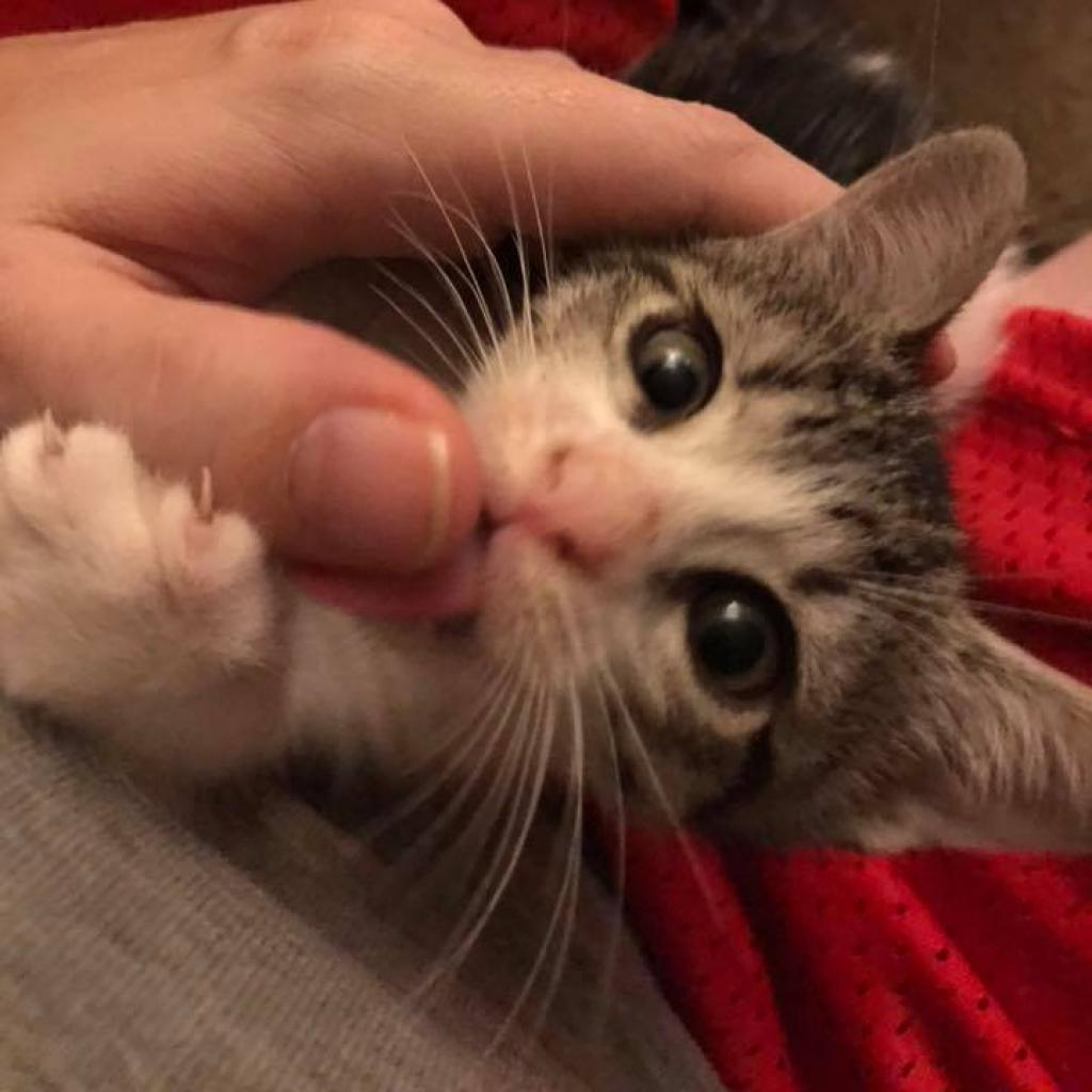 https://www.shelterluv.com/sites/default/files/animal_pics/464/2018/11/09/16/20181109160228.png