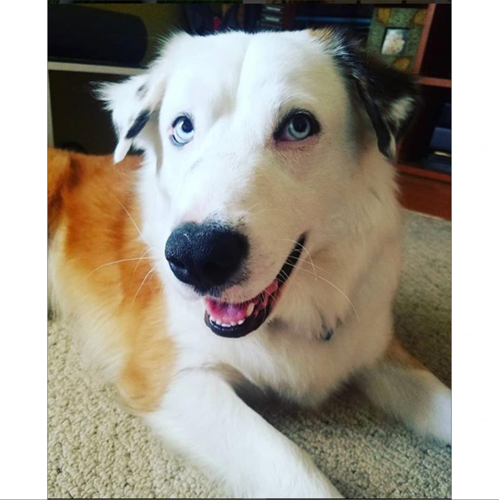 https://www.shelterluv.com/sites/default/files/animal_pics/464/2018/11/11/00/20181111000545.png