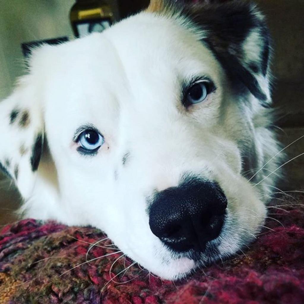 https://www.shelterluv.com/sites/default/files/animal_pics/464/2018/11/11/00/20181111000726.png