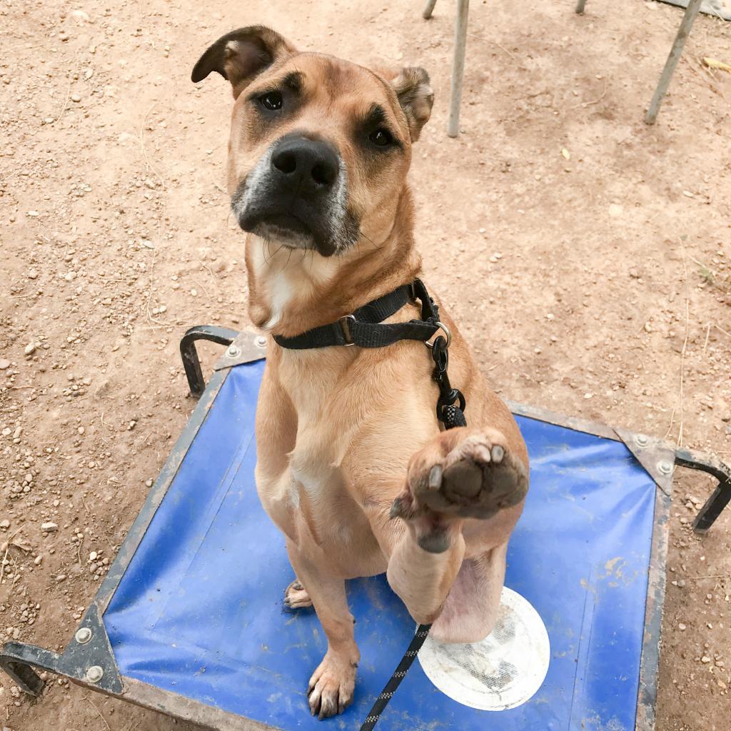 https://www.shelterluv.com/sites/default/files/animal_pics/464/2018/11/13/09/20181113091629.png