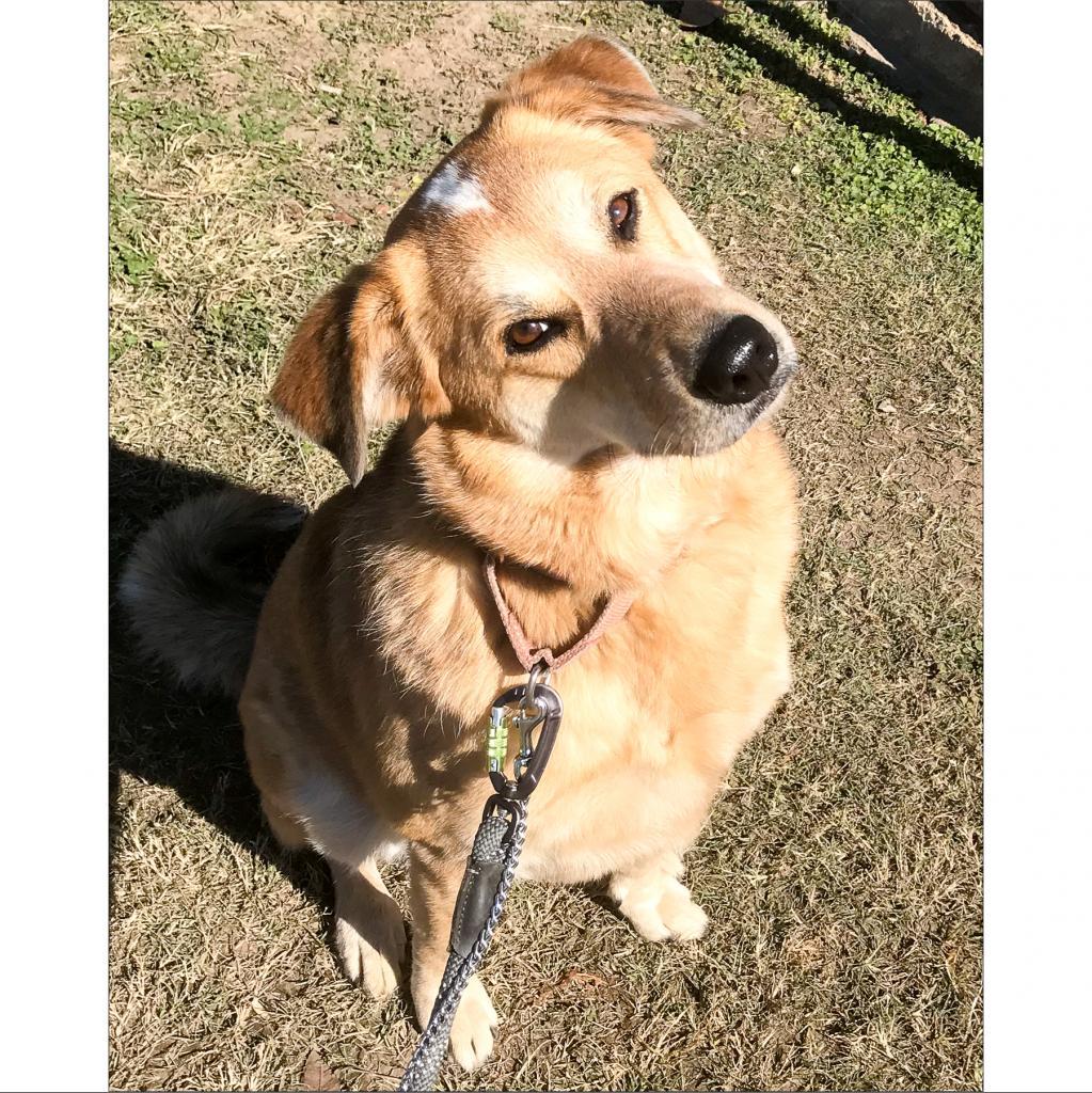 https://www.shelterluv.com/sites/default/files/animal_pics/464/2018/11/16/21/20181116210440.png