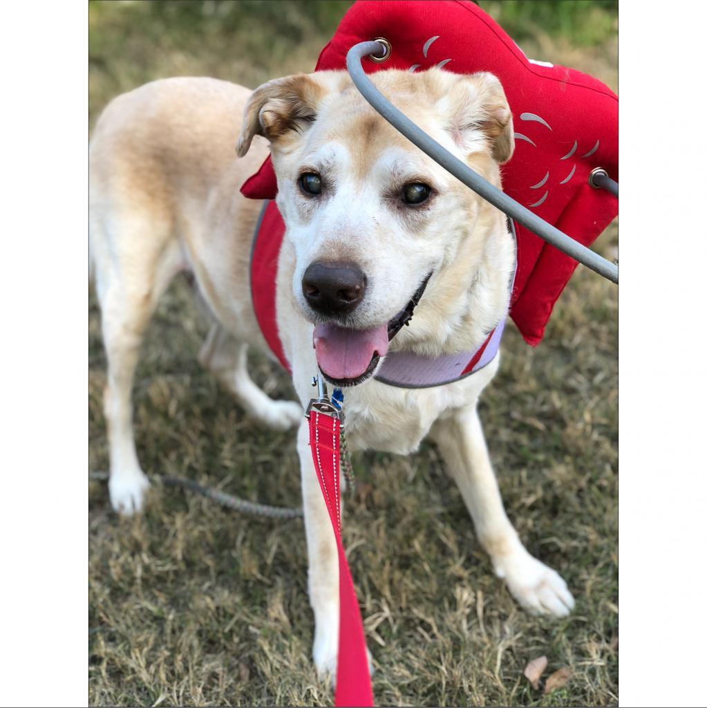 https://www.shelterluv.com/sites/default/files/animal_pics/464/2018/11/22/15/20181122154506.png