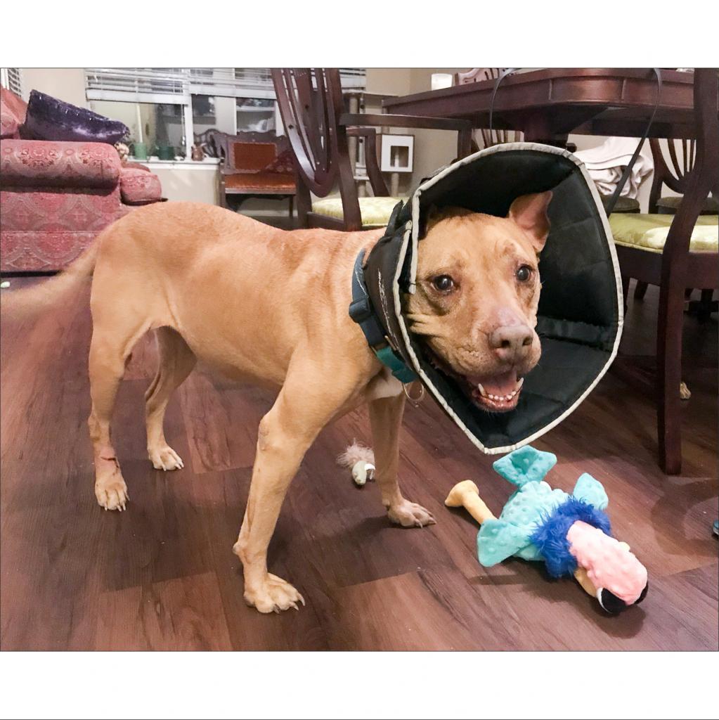 https://www.shelterluv.com/sites/default/files/animal_pics/464/2018/11/27/18/20181127181514.png