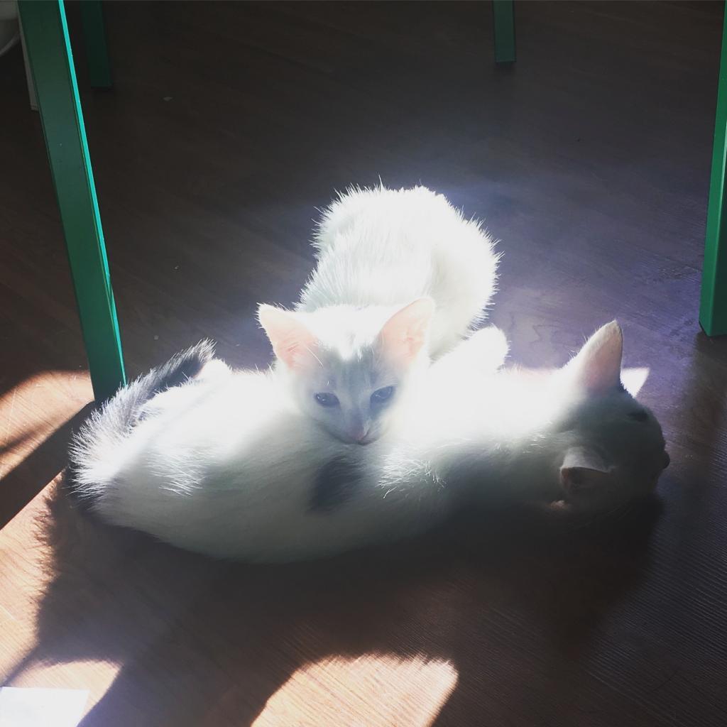 https://www.shelterluv.com/sites/default/files/animal_pics/464/2018/11/27/18/20181127185442.png