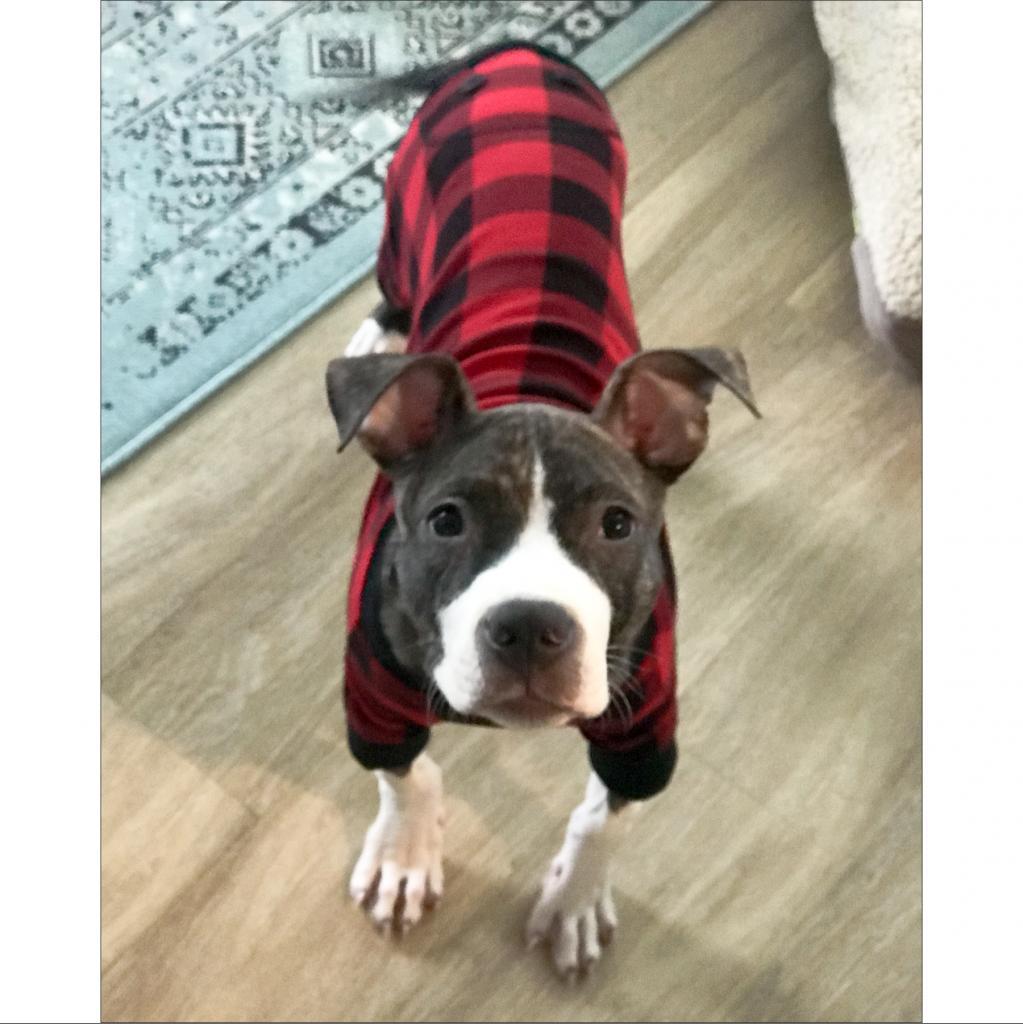 https://www.shelterluv.com/sites/default/files/animal_pics/464/2018/11/27/21/20181127210009.png