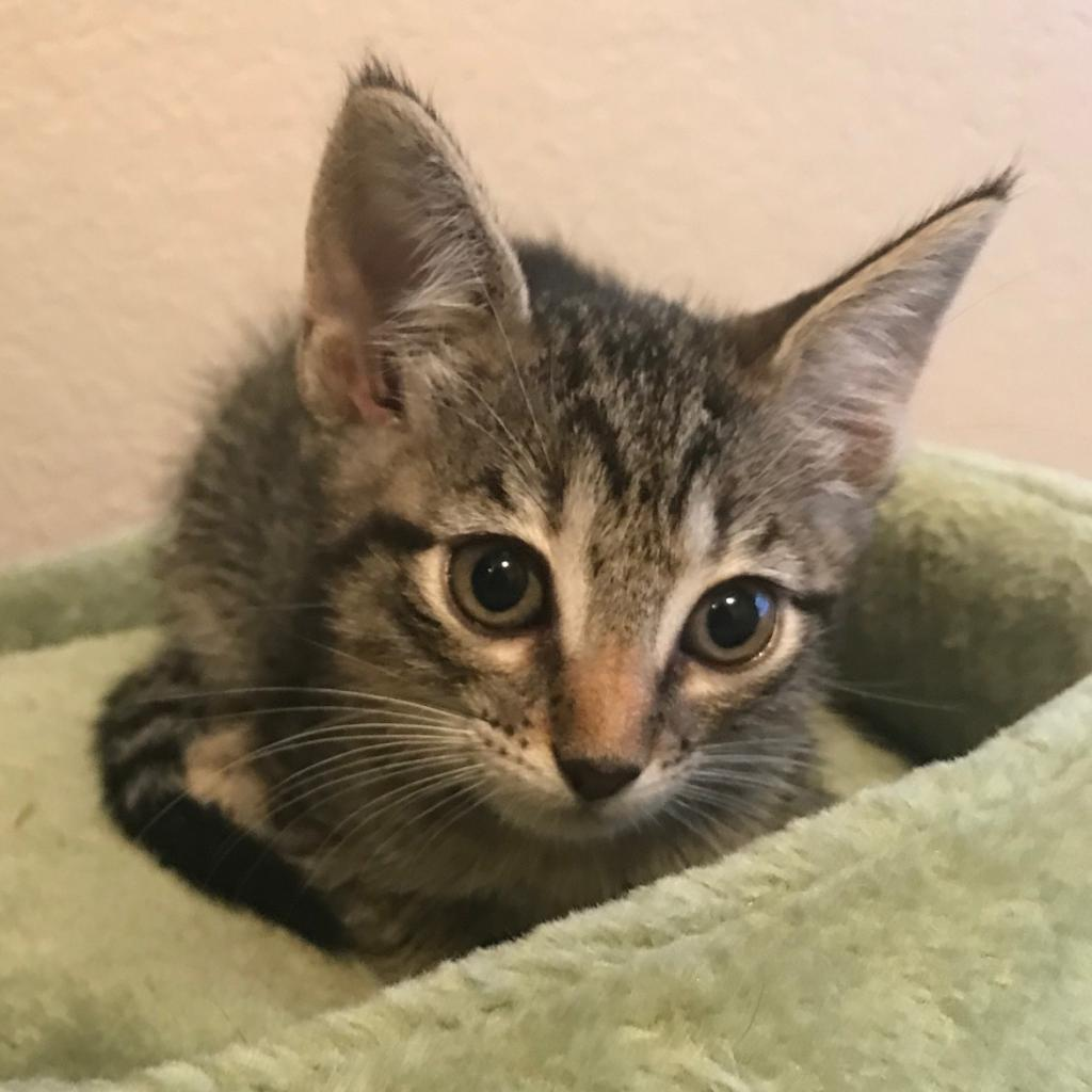 https://www.shelterluv.com/sites/default/files/animal_pics/464/2018/11/28/18/20181128182905.png