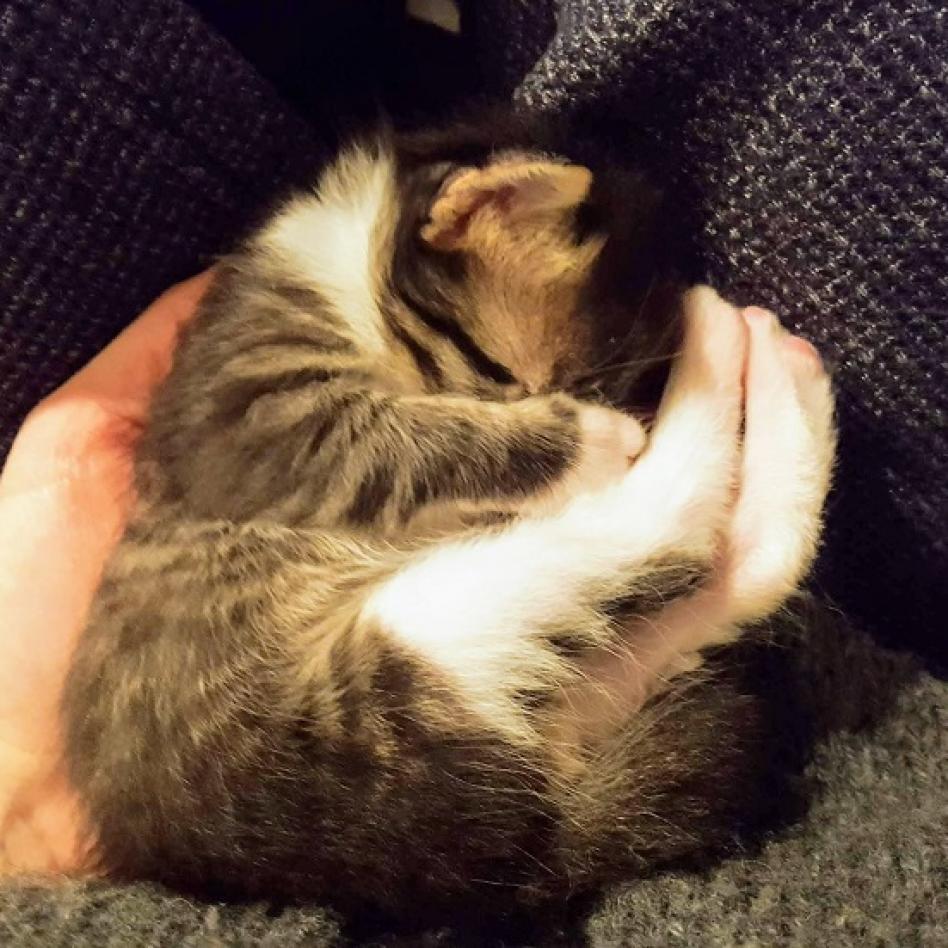 https://www.shelterluv.com/sites/default/files/animal_pics/464/2018/12/01/20/20181201201119.png