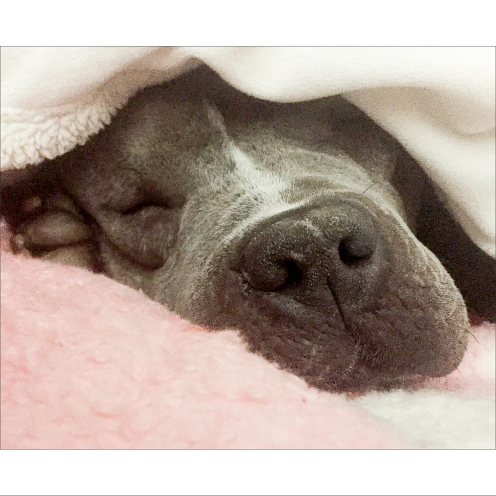 https://www.shelterluv.com/sites/default/files/animal_pics/464/2018/12/02/11/20181202110328.png