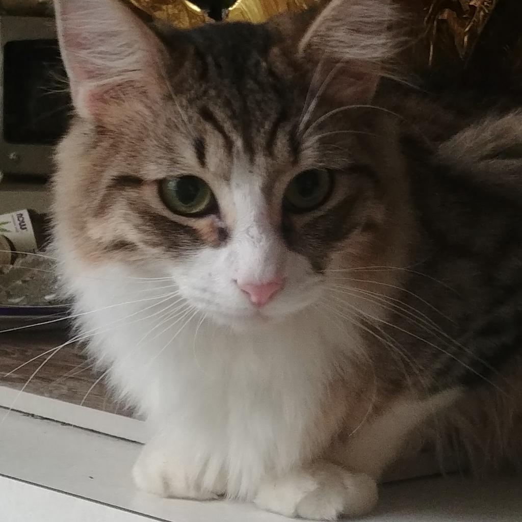 Photo of Kiara