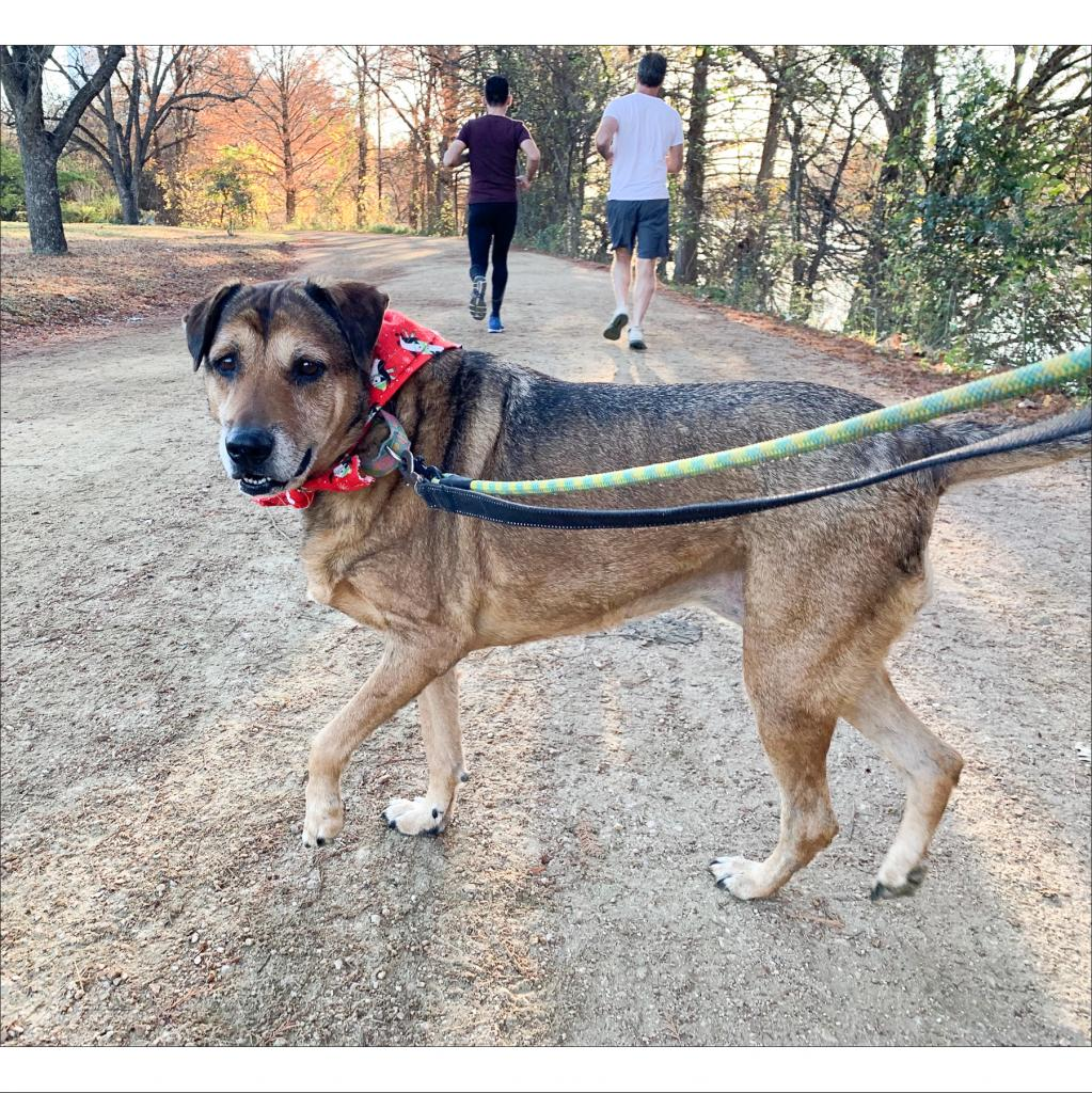 https://www.shelterluv.com/sites/default/files/animal_pics/464/2018/12/03/20/20181203201138.png