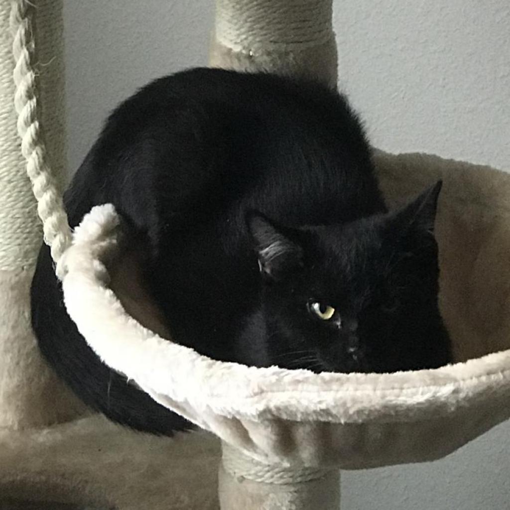 https://www.shelterluv.com/sites/default/files/animal_pics/464/2018/12/05/19/20181205190329_0.png