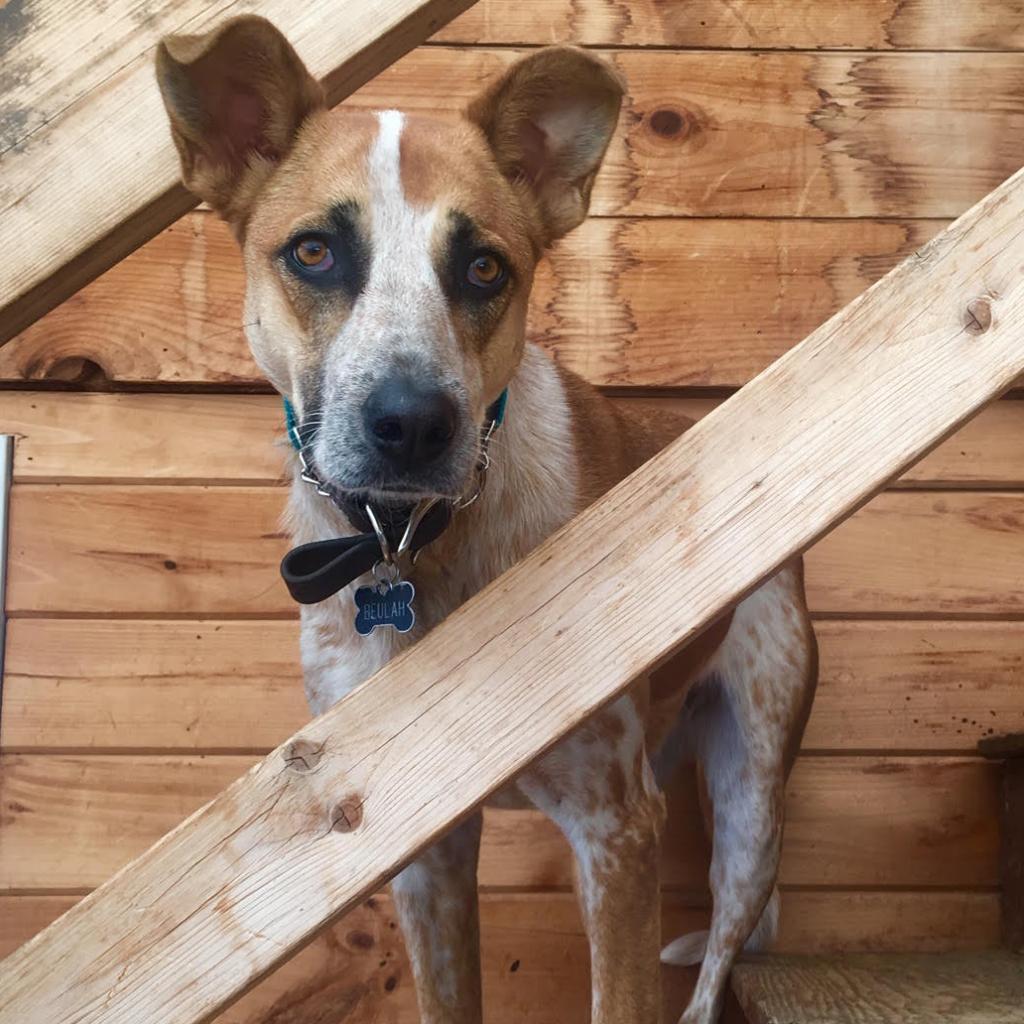 https://www.shelterluv.com/sites/default/files/animal_pics/464/2018/12/07/13/20181207134146.png