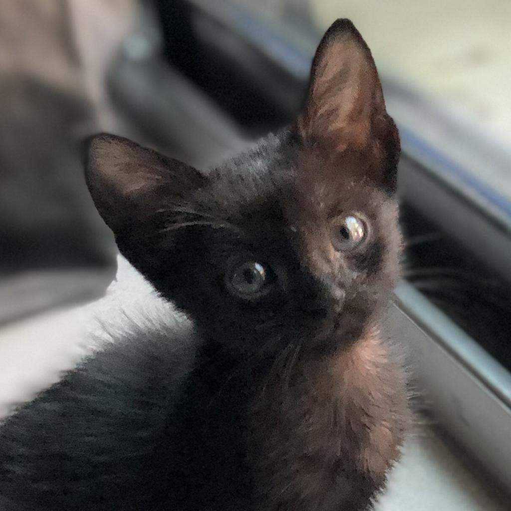 https://www.shelterluv.com/sites/default/files/animal_pics/464/2018/12/07/14/20181207142146.png
