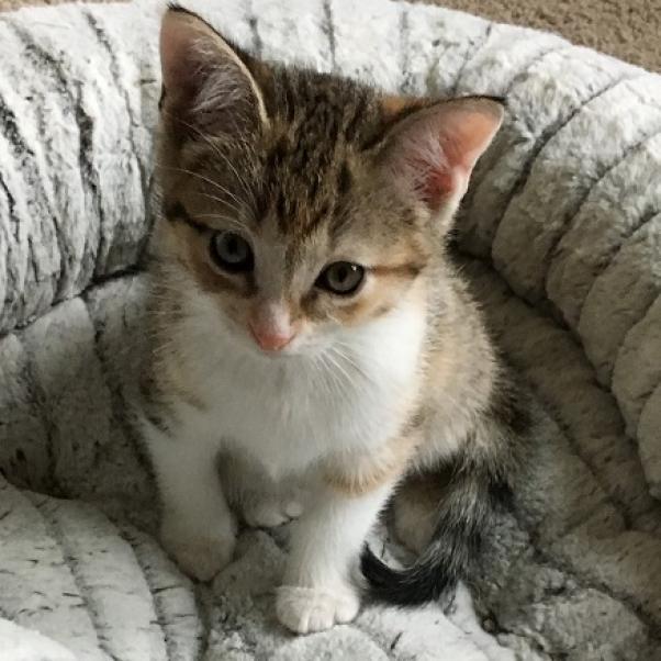 https://www.shelterluv.com/sites/default/files/animal_pics/464/2018/12/08/15/20181208150654.png