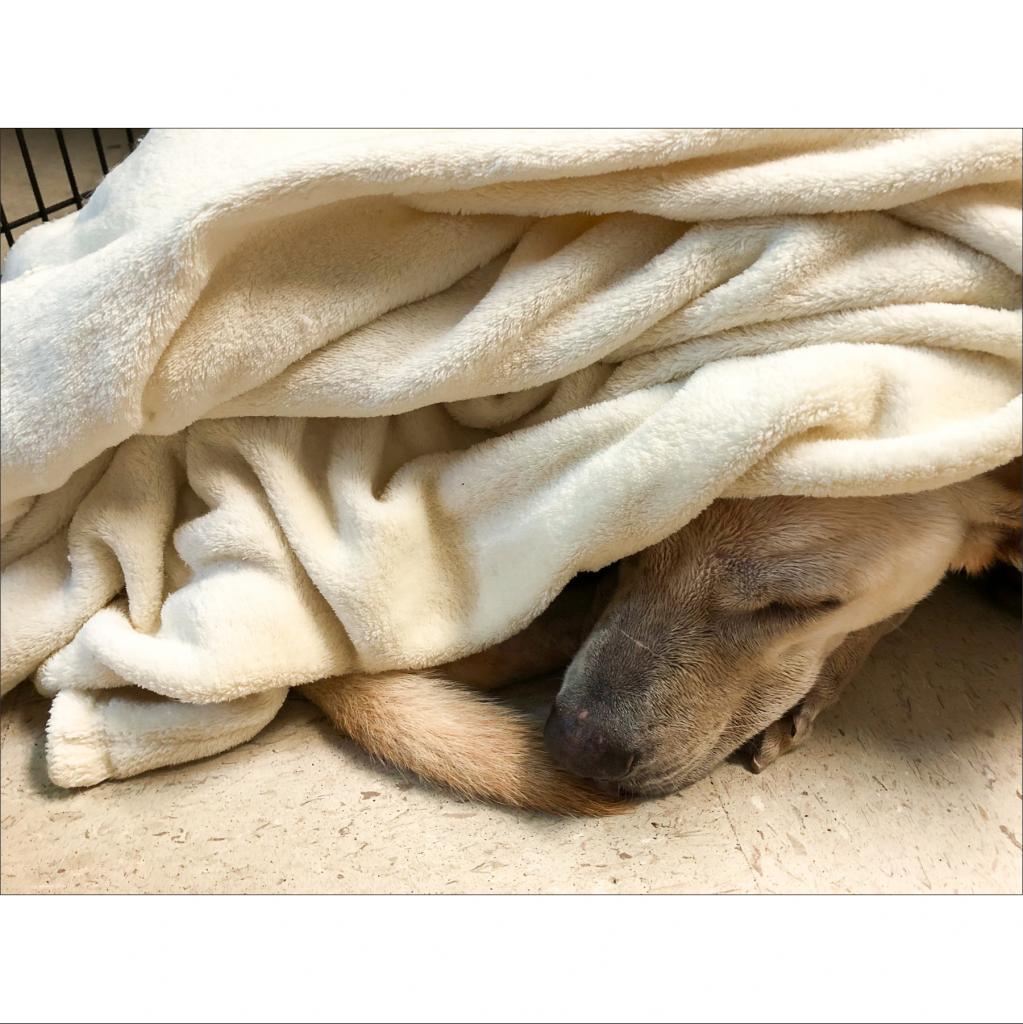 https://www.shelterluv.com/sites/default/files/animal_pics/464/2018/12/08/20/20181208203548.png