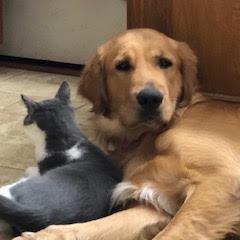 https://www.shelterluv.com/sites/default/files/animal_pics/464/2018/12/10/05/20181210055943.png