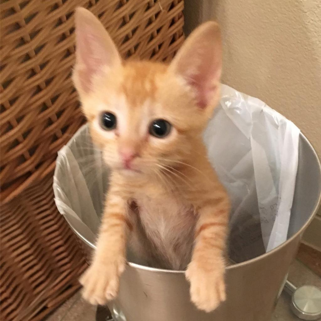 https://www.shelterluv.com/sites/default/files/animal_pics/464/2018/12/10/18/20181210181857.png