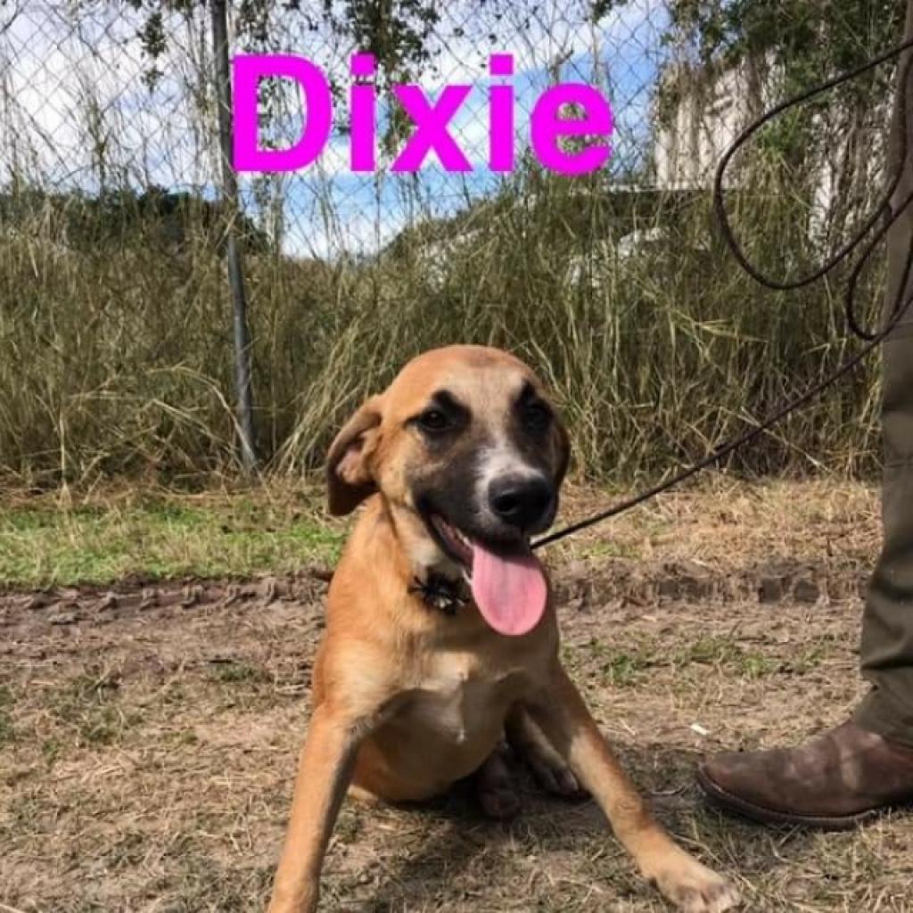 Photo of Dixie