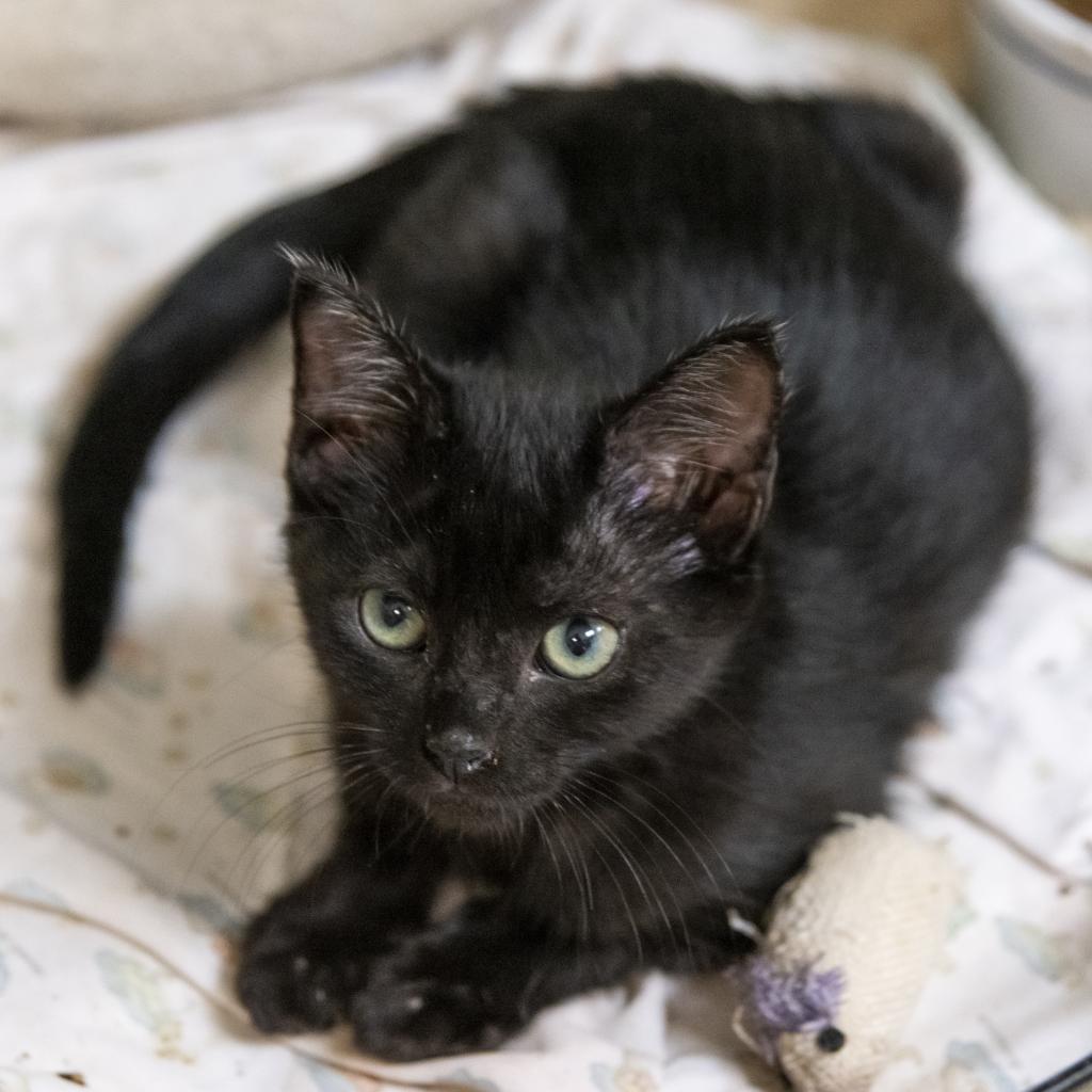 Photo of Cat Winslet