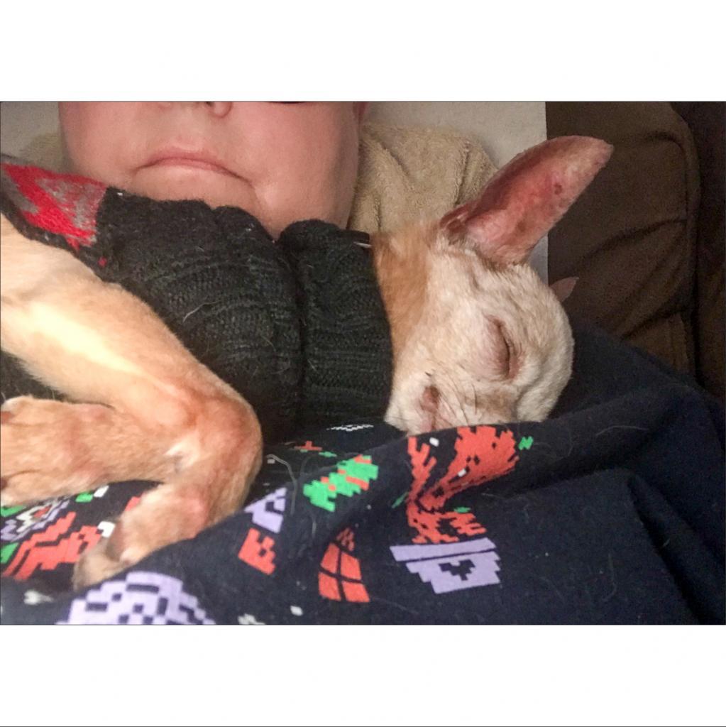 https://www.shelterluv.com/sites/default/files/animal_pics/464/2018/12/12/09/20181212094147.png