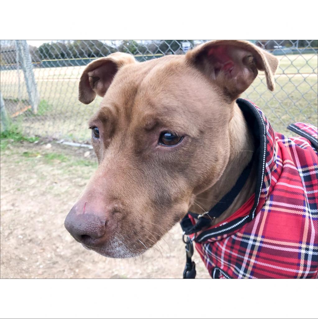 https://www.shelterluv.com/sites/default/files/animal_pics/464/2018/12/12/09/20181212094357.png