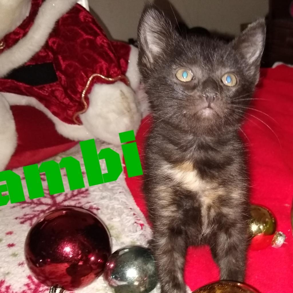 Photo of Bambi 31